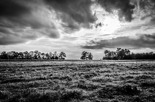 white black pumpkin lyon tennessee farms pumpkinpatch blankandwhite lyonfarms