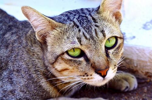 El gato de Prachuap