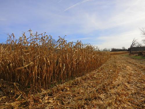 ri autum farm harvest rhodeisland s110