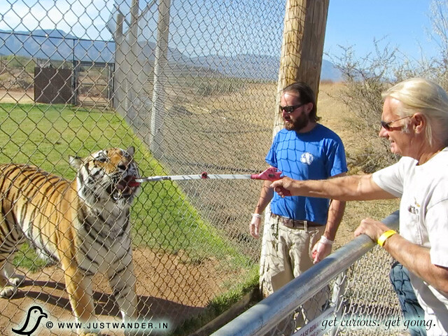 PIC: Out of Africa Wildlife Park - Bill feeding the Tiger