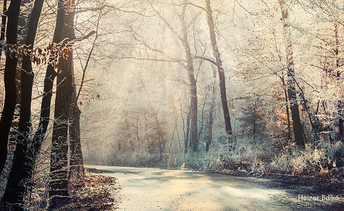 trees winter mist snow nature fog forest freeze