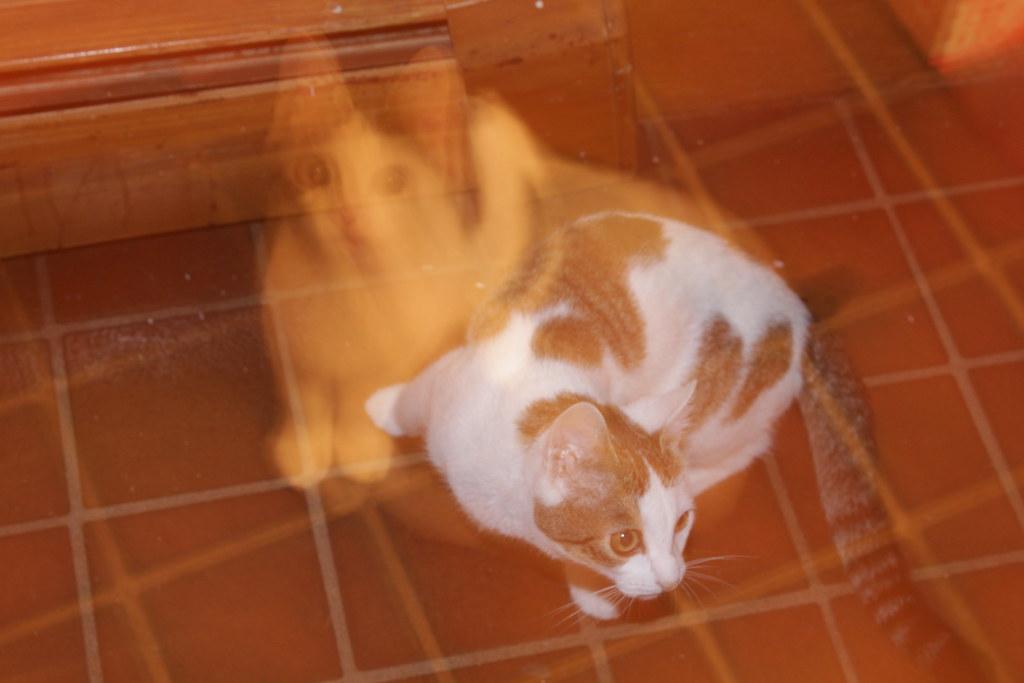 LZS CAT