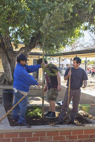 El Dorado Elementary School Tree Planting - 1/24/15
