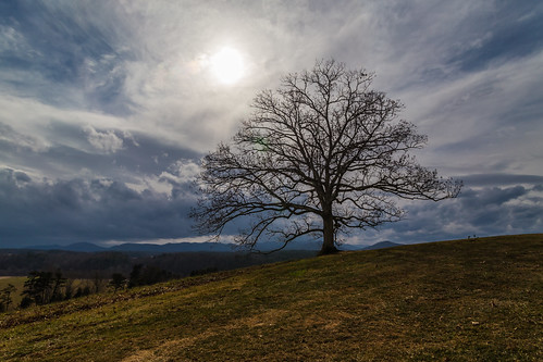 sun tree clouds nc asheville biltmoreestate
