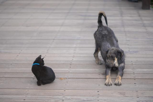 侯硐猫+侯硐犬