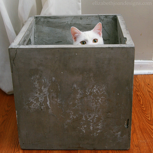 Concrete Planter Cat
