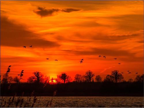 sky birds germany deutschland sonnenuntergang himmel eveningsky vögel 2015 todayssunset himmelsfarben vogelschwarm ostseeleuchte