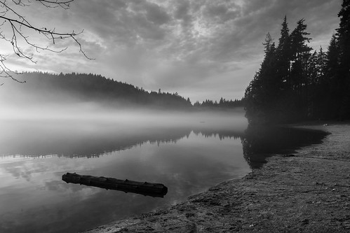 bw white mist canada black beach nature monochrome pine vancouver landscape log columbia british greyscale