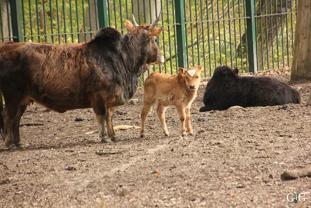 Besuch Tierpark Friedrichsfelde 17.04.201617