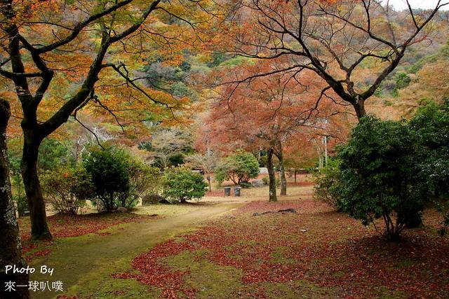 嵐山公園30