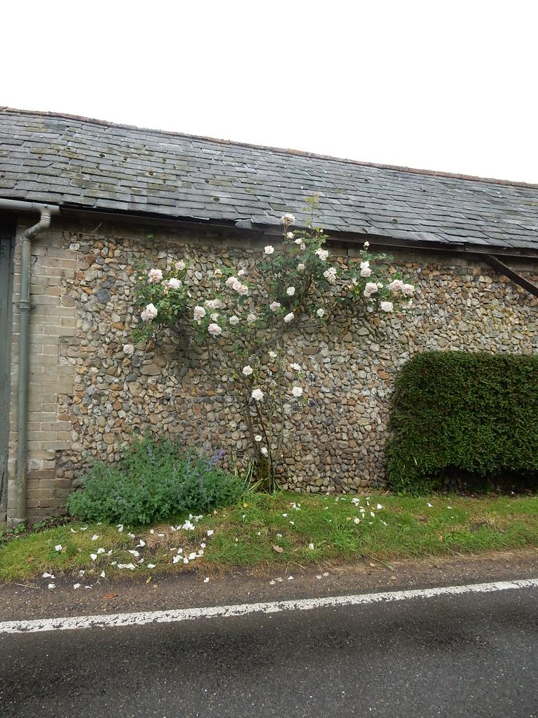 Roses on a barn Bures to Sudbury