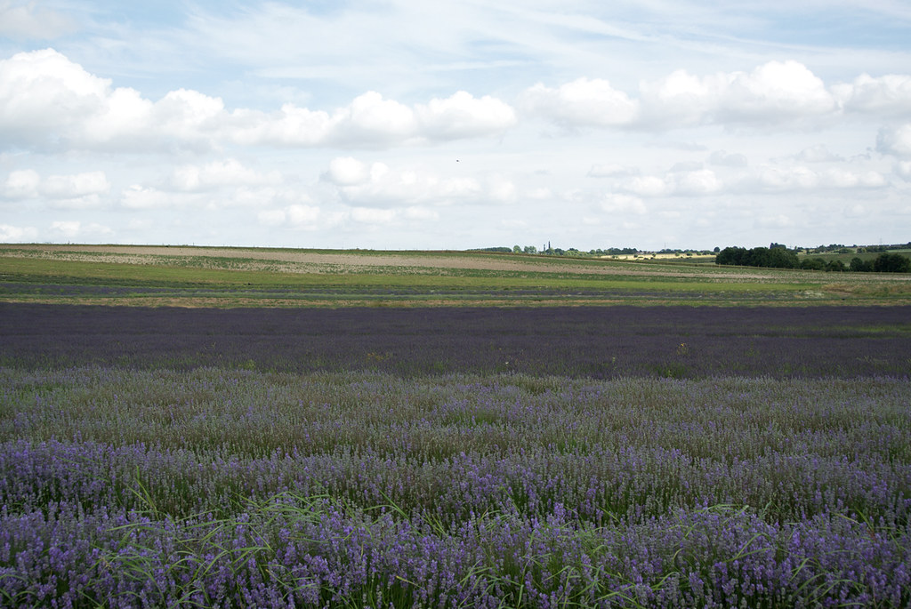 Hitchin Lavender Farm Arlesey to Letchworth Garden City