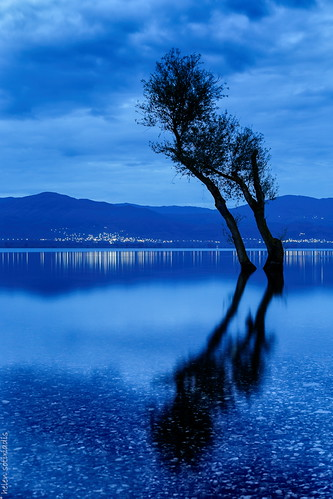 longexposure morning blue lake black reflection tree public silhouette canon landscape dawn lights published greece bluehour waterscape canonef50mmf14usm agrinio canoneos6d trichonida ayearofpictures2013