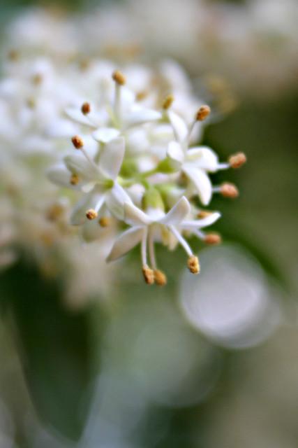 springtreeblooms - 311