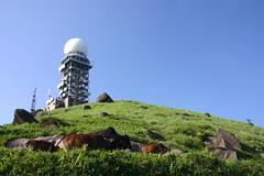 IMG_0494 - 大帽山 Tai Mo Shan