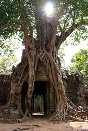 The trees have really taken over many of these sites. This time at Prasat Ta Som.