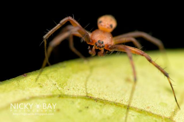 Orb Web Spider (Araneidae) - DSC_0869
