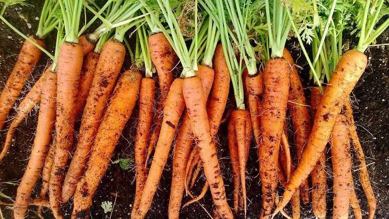 Weekly Harvest WP_20130728_009