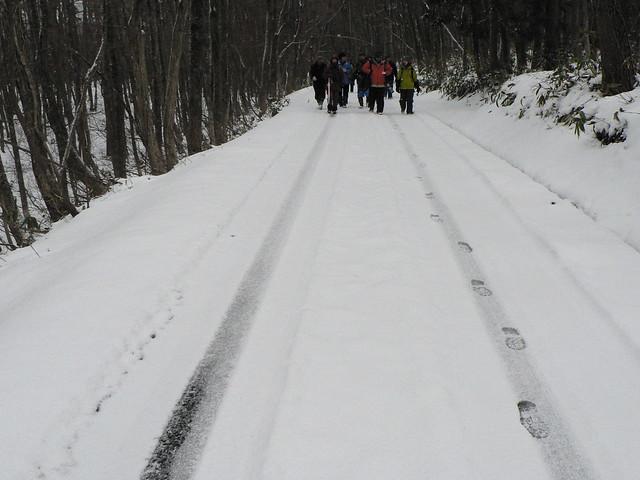 苅尾の登山道を下る.乗用車の轍がひとつ.登っているのはだれだろう?