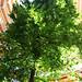 Baumkronenpfad