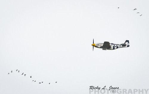 P-51 Mustangs Flying Low by Ricky L. Jones Photography