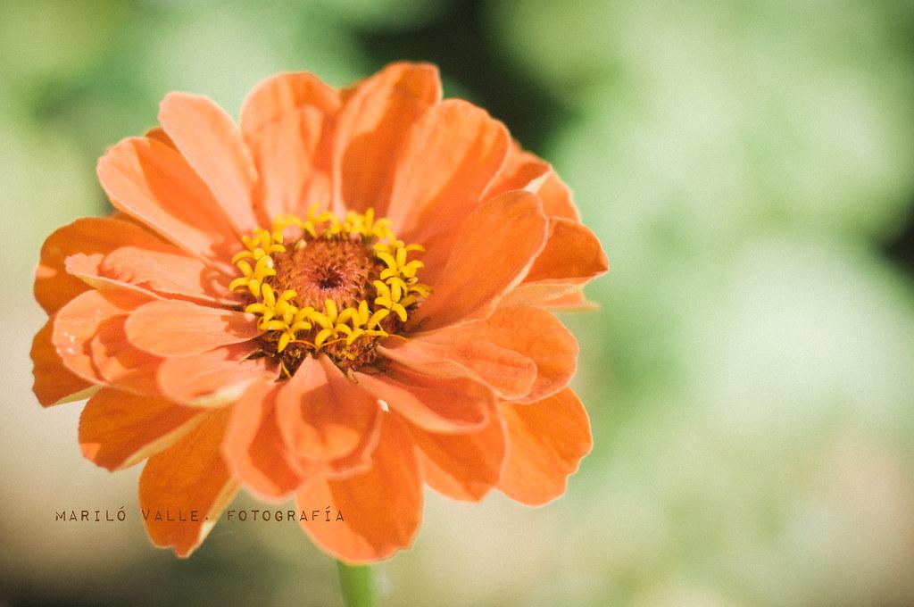 Las flores y la ocasión, son de corta duración.