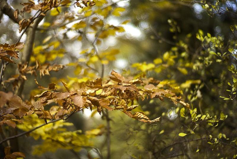 golden woods