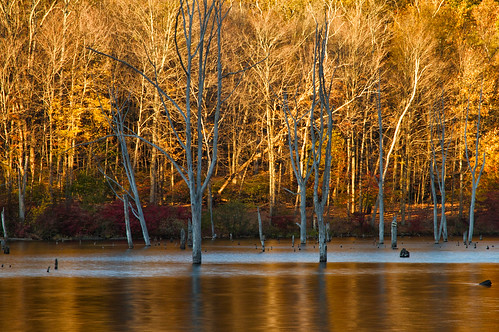 park new longexposure trees cold nature water sunshine reflections landscape pond colorful long shadows state jersey ironworks flooded
