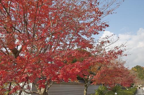 【写真】紅葉 : 妙満寺