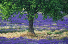 Colours of the Provence