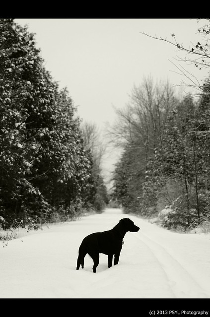Black dog in white forest #3