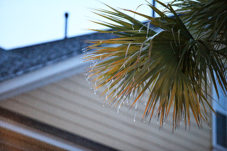 web_palms_ice_0011