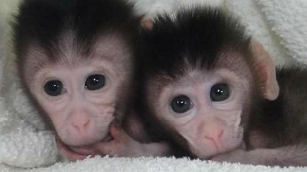 monos-diarioecologia