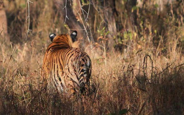 Mahindra Adventure Wild Escape 2014 Tiger