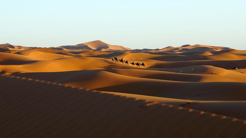 Caravana de dromedarios en el Sahara marroquí