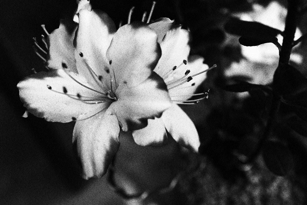 花卉 顆粒黑白 EOS M