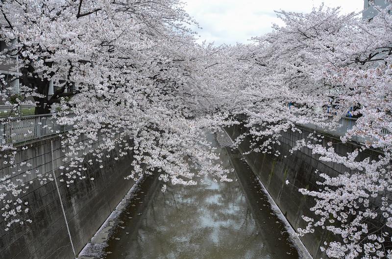 04.03.2014_kandagawa-46