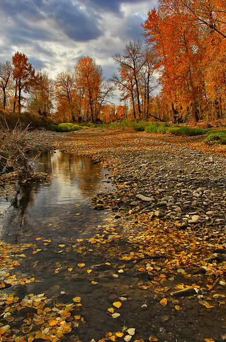 autumn trees fall water grass creek forest canon reflections river woods rocks stream earth fallcolors autumnleaves foliage soil dirt bushes bowriver davidsmith fishcreekpark calgaryalbertacanada eos60d