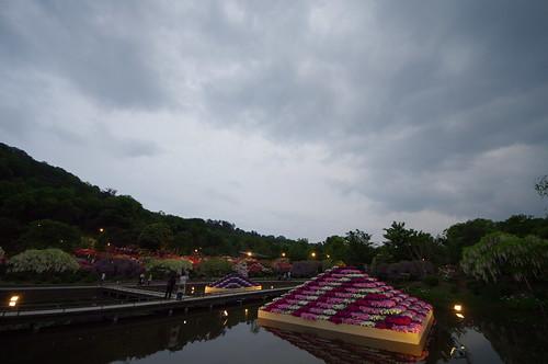 Ashikaga Wisteria festival 2014 2014 11