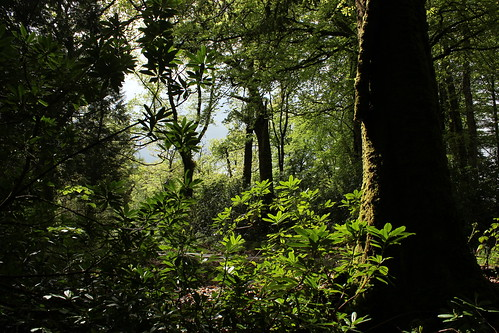 light tree green nature leaves moss woods path rhododendron eos600d lougheskedemesne