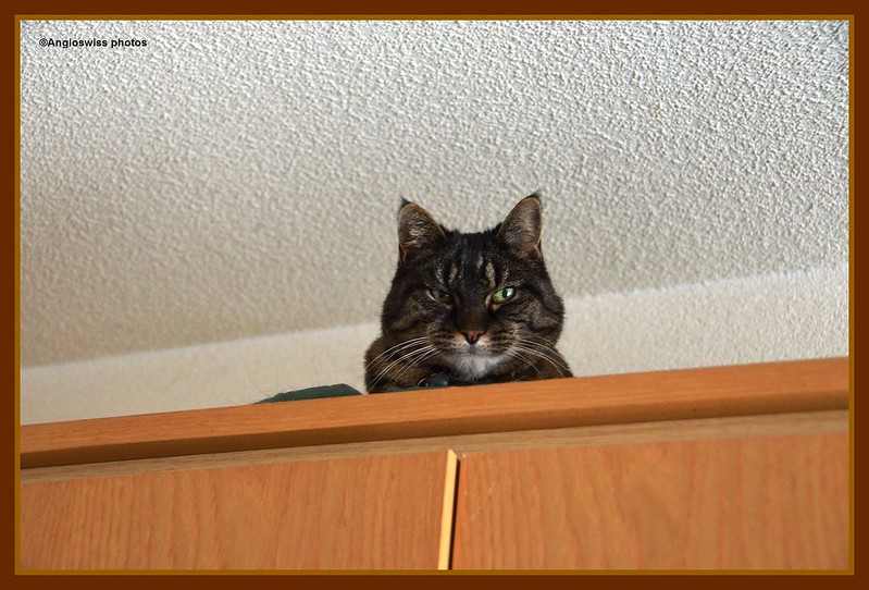 Tabby looking down from he top of the world