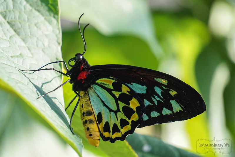 butterflies-19-wm