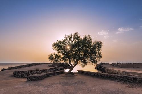 seascape tree sunrise wideangle santorini greece thira goldenlight egeo leefilters nikond800 lee06gndsoft phottixgeoone nikkor160350mmf40 coastalfishingport