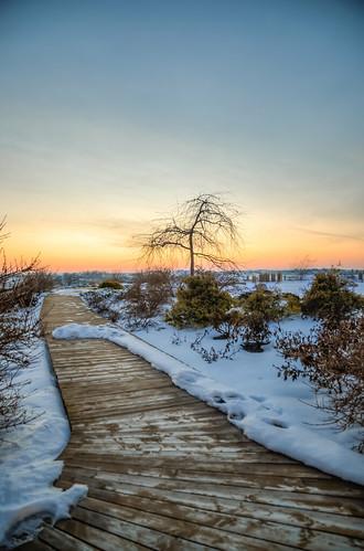 wood winter sunset snow tree wisconsin work campus wooden bush landscaping path walk board horizon verona boardwalk epic hdr epicsystemscorporation intergalacticheadquarters