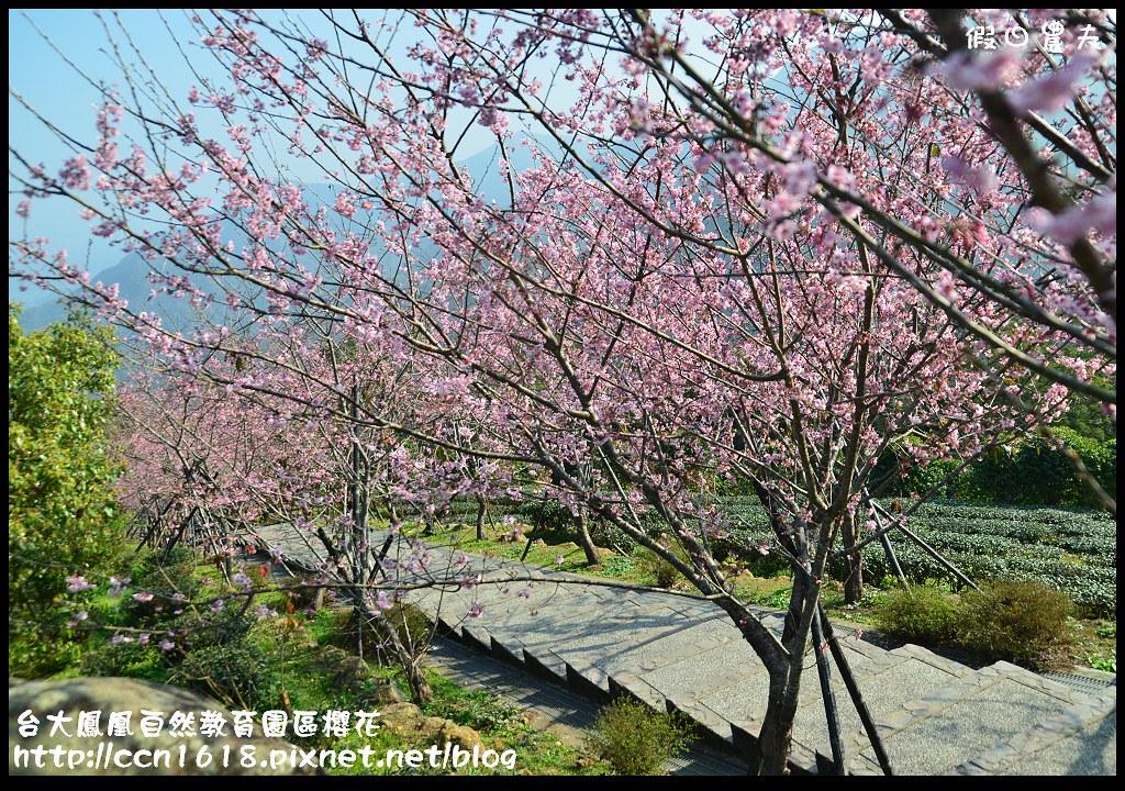 台大鳳凰自然教育園區櫻花DSC_6076