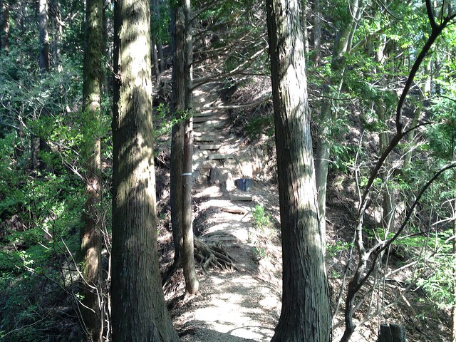 錫杖ヶ岳 加太コース 登山道