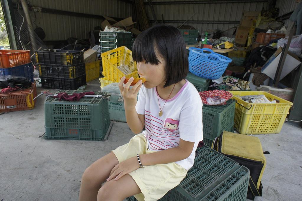 枋山芒果田 (12)