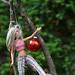 Hanging Barbie