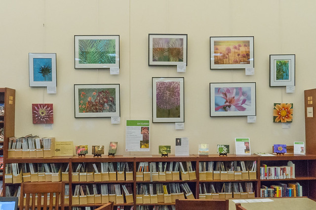 "Hanging an Art Exhibit - ""Garden Party - A Celebration of Botanical Photography"" at Alicia Ashman Branch, Madison Public Library"