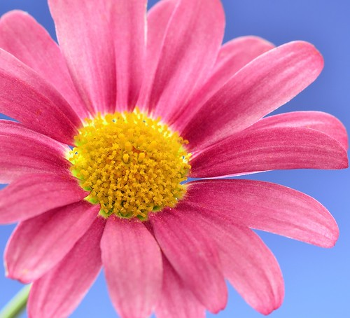 Pink Yellow and Blue